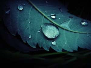every_teardrop_by_mesfaiblesses-d41pibc